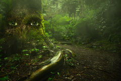 Big tree with eyes in tropical green forest with fairytale light. live nature concept Stock Images