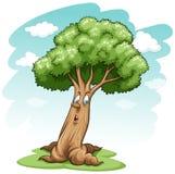 A big tree Stock Image