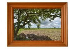 Big tree and field image in teak frame. On white background Stock Photography