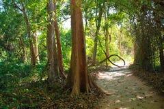 Big tree Stock Image