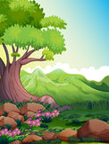 A big tree at the forest Royalty Free Stock Photos