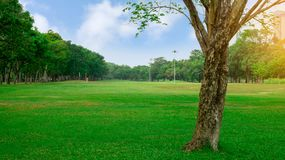 Big tree on fresh green grass smooth large lawn yard, good maintenance lanscapes in apublic park garden under blue sky. Big tree on fresh green grass smooth stock image