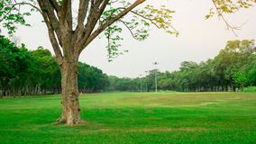 Big tree on fresh green grass smooth large lawn yard, greenery trees on background, good maintenance lanscapes in a public park. Garden under cloudy sky royalty free stock images