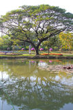 Big tree and garden reflection. Image Royalty Free Stock Photo