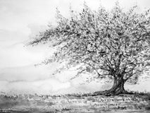 Big tree in grass field and sky, watercolor painting on paper hand drawn. Black and white tone minimal monochrome Royalty Free Stock Photography