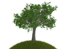 Big tree on the grass isolated on white background. 3D illustrat. Ion vector illustration