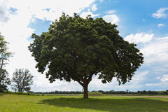 Big tree and green environment on grassland. Royalty Free Stock Photo