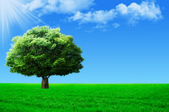 Big tree on green field Stock Images