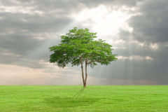 Big tree with green field Royalty Free Stock Photography