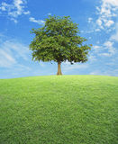 Big tree with green grass field over blue sky. Nature background Stock Photography