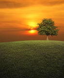Big tree with green grass field over sunset sky, nature backgrou Royalty Free Stock Photo