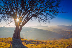 Big tree on a green hill Stock Photography