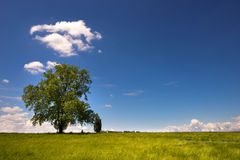 Big Tree on Green Meadow Stock Photography