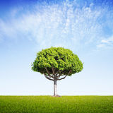 Big tree Royalty Free Stock Photo