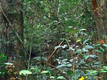 Big tree Green tropical rainforest background. Bug tree Green tropical rainforest background royalty free stock photo