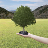 Big Tree grown in the hand and lawn. Stock Images