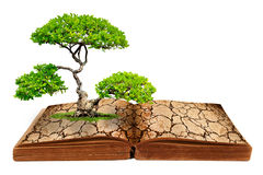 The big tree growth from a book. With cracked ground texture, Global warming concept Stock Image