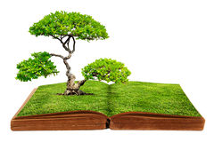 The big tree growth from a book Stock Photos