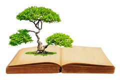 The big tree growth from a book. Isolated on white background Stock Photo