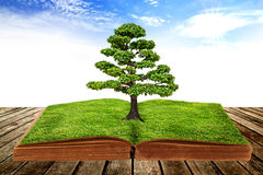 The big tree growth from a book. With beautiful sky background Royalty Free Stock Photo