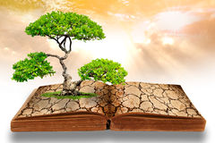 The big tree growth from a book. With cracked ground texture, Global warming concept Royalty Free Stock Images