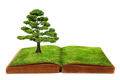 The big tree growth from a book. Isolated on white background Royalty Free Stock Photography