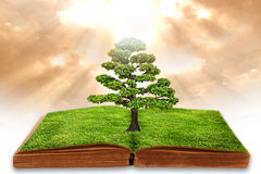 The big tree growth from a book Royalty Free Stock Photography