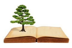 The big tree growth from a book. Isolated on white background Royalty Free Stock Photos