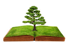 The big tree growth from a book isolated. On white background, Creative concept image global warming concept Royalty Free Stock Photos
