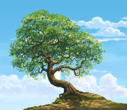A big tree on hill. Day sky background illustration Royalty Free Stock Photo