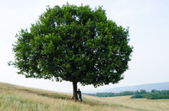 Big tree on hill and teenager sit near listen to music in nature Stock Photography