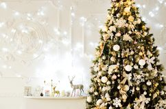 Big tree at home in a cozy atmosphere royalty free stock image