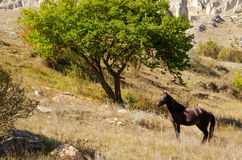 The big tree and the horse looking at him. In Kabardino-Balkaria Stock Images