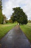 Big tree. At hyde park London,UK Royalty Free Stock Photography