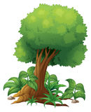 A big tree Royalty Free Stock Photography