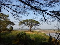 Big tree. Jamjuree is located on the banks of the Mekong River in Phosai District, Ubonratchathani Province. Thailand stock photos