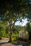 Big tree in the jungle near temple Stock Image