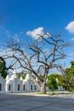 Big tree. The big tree in the Kuthodaw Paya at blue sky Stock Photo