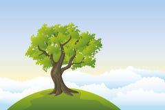 Big tree Royalty Free Stock Photo