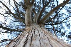 Big Tree Royalty Free Stock Photography
