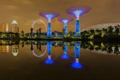 Big Tree light show night Royalty Free Stock Images