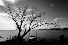 Big tree and little boat. Long exposure view of a lake shore, with a big  tree and some little fishing boats Royalty Free Stock Photo