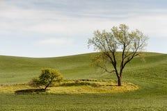 Big Tree, Little Tree Royalty Free Stock Image