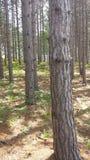 Big tree, little tree. Taken in michigan Royalty Free Stock Image