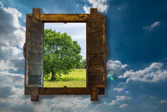 Big tree by looking through woonden window on blue sky Stock Photography