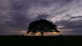 Big tree on the meadow after sunset. stock footage