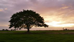 Big tree on the meadow at sunset. stock footage