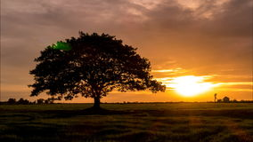 Big tree in the meadow. Big tree in the meadow when sunset, Time Lapse stock footage