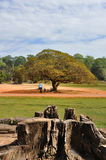 Big Tree in the middle of Angkor Thom Stock Photo