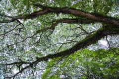 Big tree with moss Stock Photo
